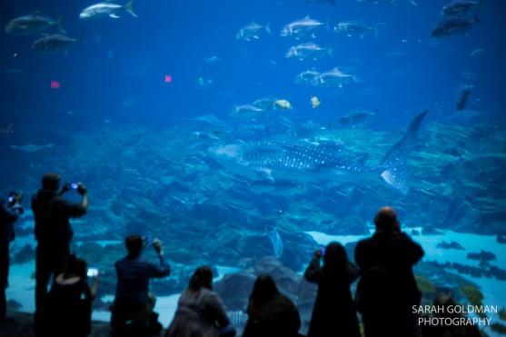 ga aquarium party at imaging usa
