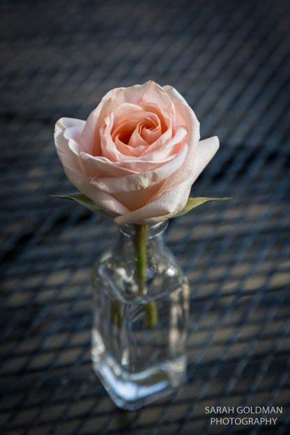 rose in a glass vase