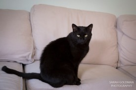 black cat sitting on a couch