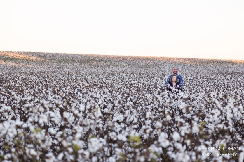 family photos in a cotton field south carolina
