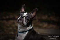 dog photos charleston sc
